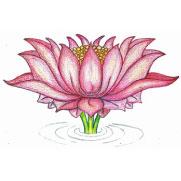 lotus-flower-student-carmen-mensink