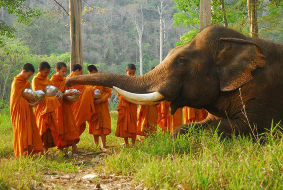 sri-lanka-elephant-monks