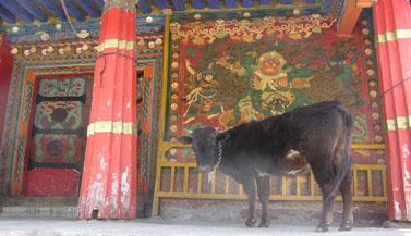 tibet-nechung-gompa-carmen-mensink