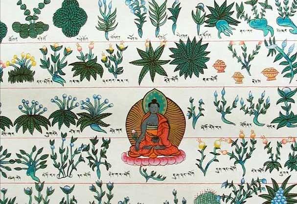 tibetan-medicine-healing-plants-herbs