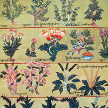 tibetan-medicine-healing-plants