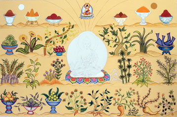 tibetan-medicine-plants-by-carmen-mensink