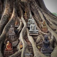 buddhas-in-tree-sukhothai