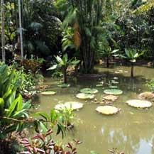 buddhist-orchid-garden-singapore