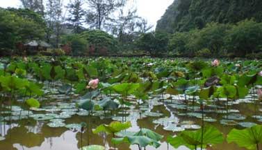 lotus-pond-temple-malaysia