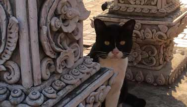 thai-temple-protector-cat