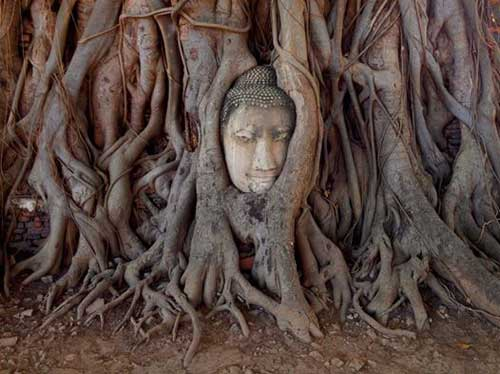 ayutthaya-buddha-face-in-tree