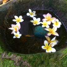 balinese-flowers