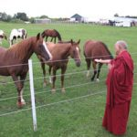 lzr-blessing-horses-with-mantra