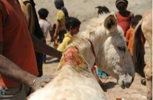 working-animals-nepal-project